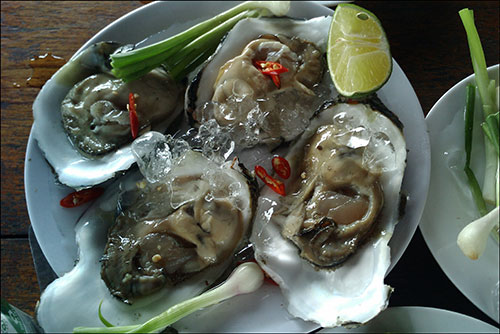 Hàu sống  (oysters ) images